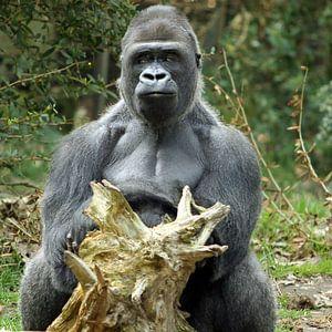Gorilla-lunch
