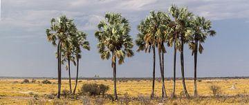 'Verdwaalde' palmbomen in de woestijn, Etosha van Rietje Bulthuis