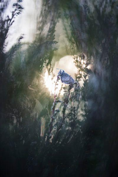 Sonnenaufgang von Bob Daalder