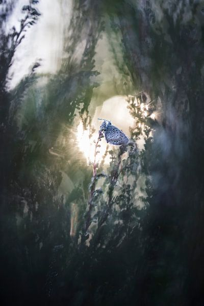 Sunrise van Bob Daalder