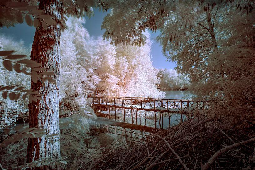 Brug in de bomen (kleur) van Ruud Peters