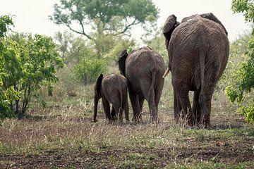 Elefanten von Petra Lakerveld