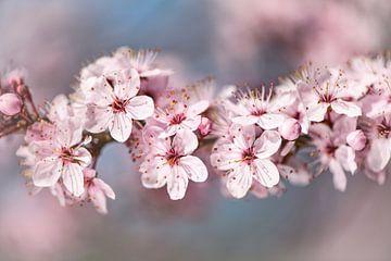 Photo Spring Blossom avec le bord doux. sur Alex Hiemstra