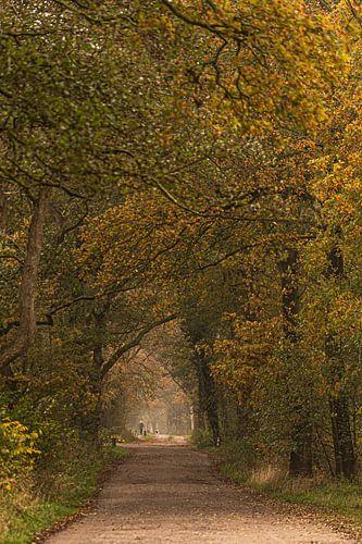 Bos bij Schipborg