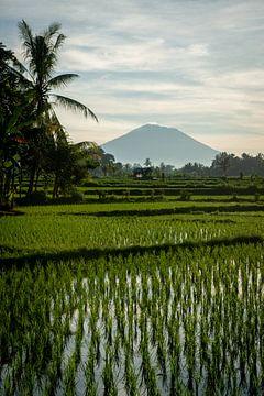 Neuer Reis in Ubud 4 von Ellis Peeters