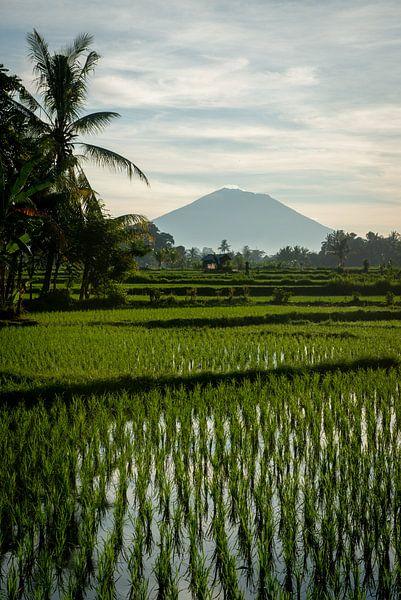 Nieuwe rijst in Ubud 4 van Ellis Peeters