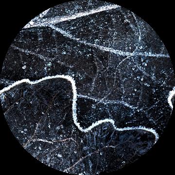 Patroon van de nerven in een blad van AGAMI Photo Agency