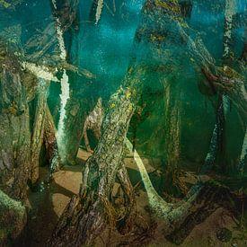 geheimzinnig oerbos van Eugene Winthagen
