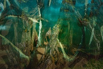 geheimnisvoller Urwald von Eugene Winthagen
