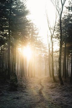 Der letzte Atemzug des Winters von Robert Paul Jansen