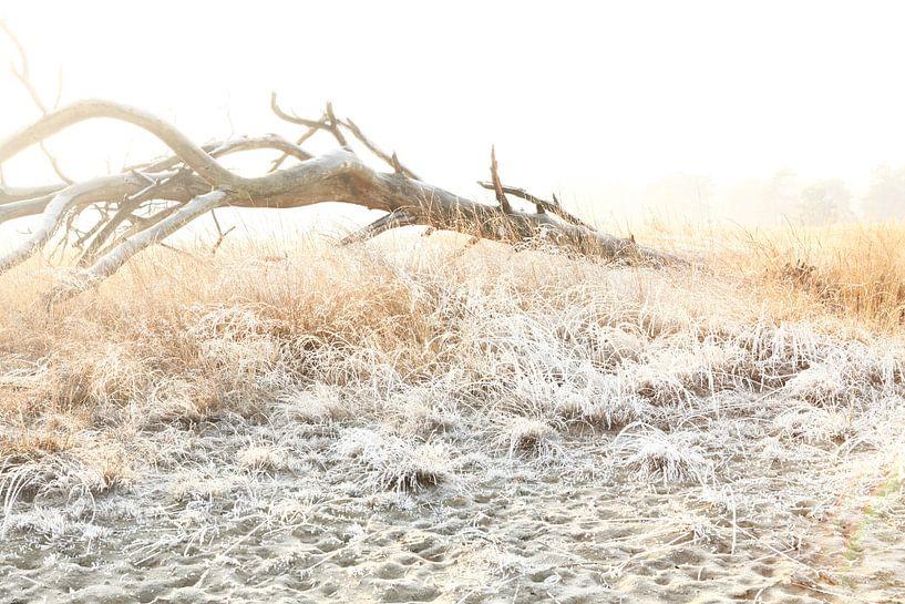 Winter in de Loonse en Drunense duinen! van Diana van Geel