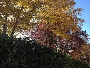 Herfst van Sharon vD