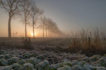 Morgen von Moetwil en van Dijk - Fotografie