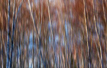 Märchenhafter Wald von Thomas Jäger