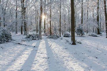 Stralend winterbos met sneeuw en zonnestralen van Martin Stevens