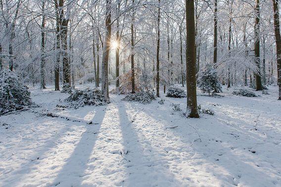Stralend winterbos met sneeuw en zonnestralen
