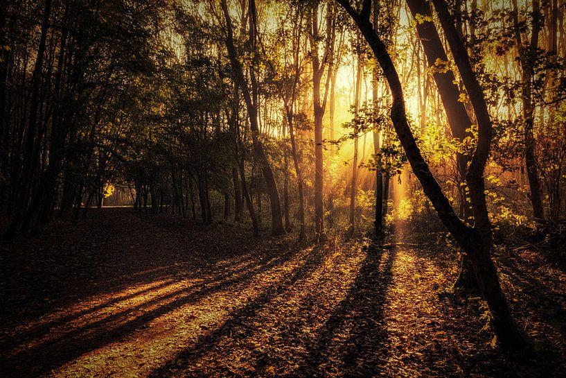 Dawn of a New Season van Cho Tang