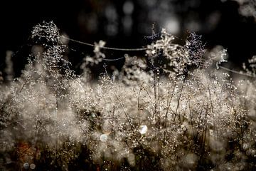 Die Tautropfen bilden zusammen eine ganze Landschaft, die mit dem Licht spielt. von Studio de Waay