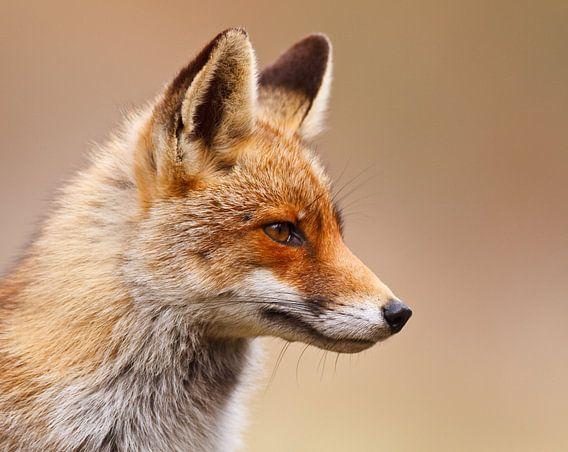 red fox van Pim Leijen