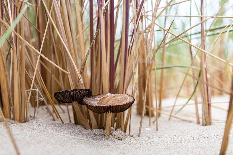 Duinpaddenstoelen van Ingrid Aanen