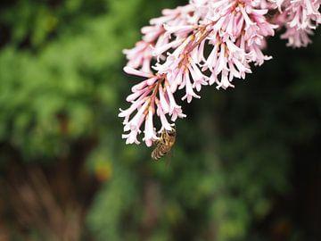 Die Biene von Eline Melis