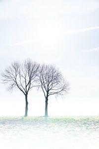 bomenharmonie