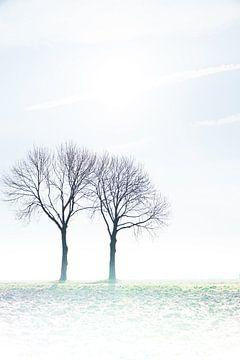 bomenharmonie von