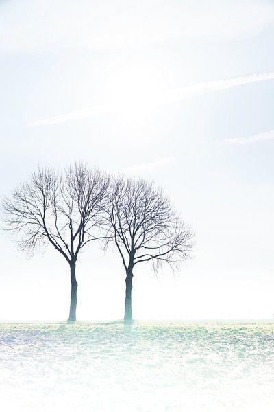 bomenharmonie von Karin in't Hout