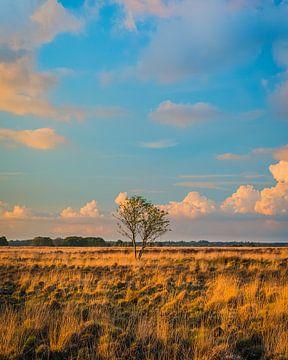 Avondlicht in Nationaal Park het Dwingelderveld