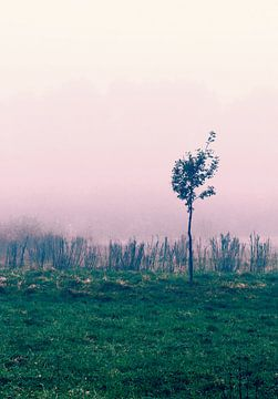 Eenzame Boom - roze lucht, veld, bos van Nicole Schyns