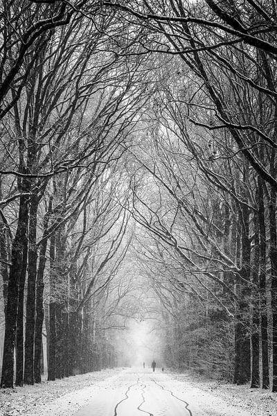 Winter has come van Mark Vredeveld