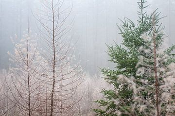 Winters Speulderbos van Nancy van Verseveld