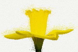 Daffodil mozaïek