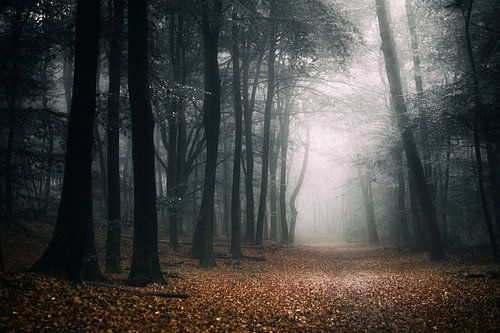 Dark Fall