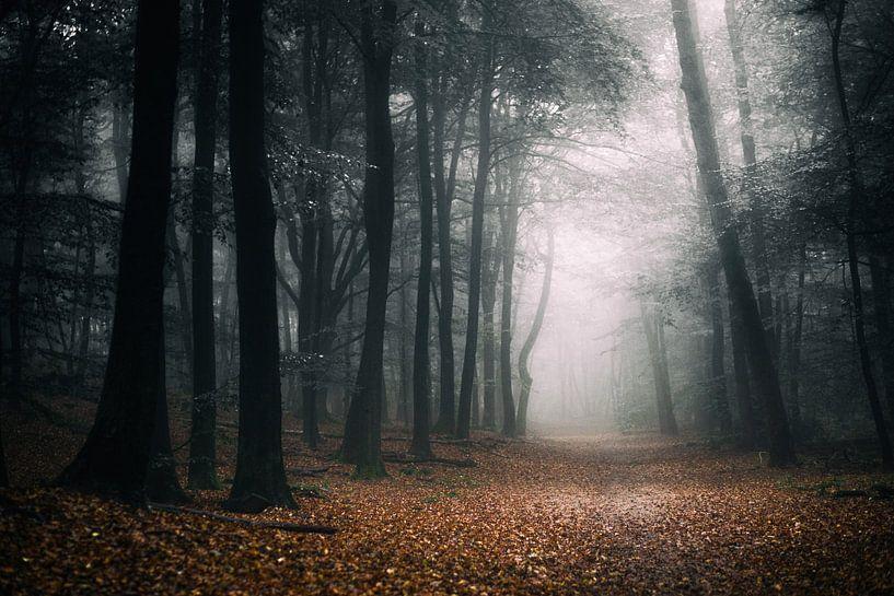 Donkere herfst van Tvurk Photography