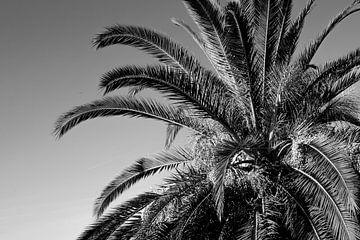 Palme in Schwarz und Weiß von Bianca ter Riet