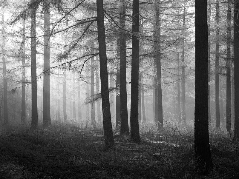 Wald aus Lärchenbäumen in Schwarz-Weiß von Corinne Welp