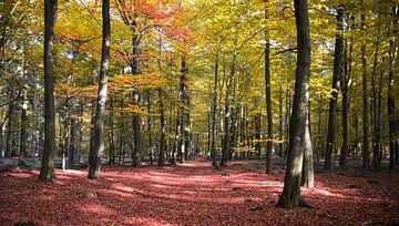 herfstig bos van Karin vanBijleveltFotografie