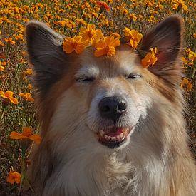 IJslandse hond van Astrid Ingrid Wevers