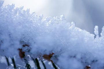 Macrofoto van sneeuw in Drenthe van Karijn Seldam