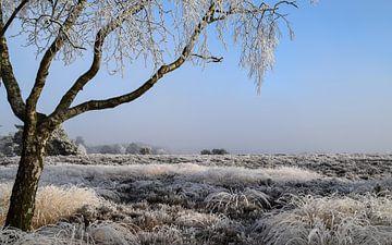 Winterwonderland von Madelief Wesche