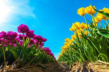 Gele en paarse tulpen met zonneschijn van Ruurd Dankloff