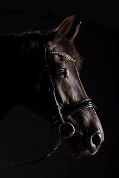 Pferdekopf von Annet van Esch
