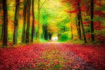 Herbstfarben im Wald von eric van der eijk