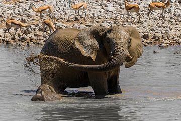 Elefant Schlammdusche von Felix Brönnimann