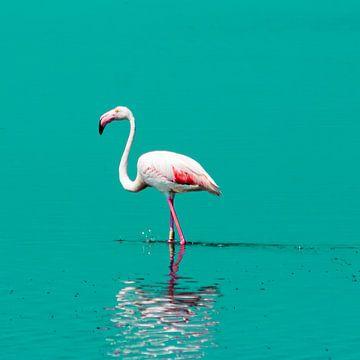 Flamingo in het water van Stefania van Lieshout