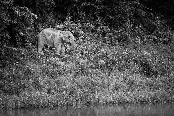 Olifant in de jungle van Johan Zwarthoed