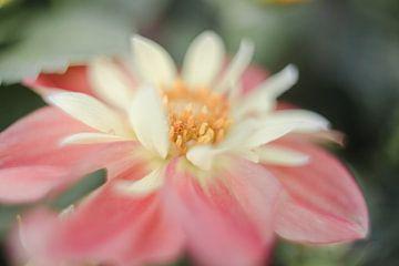Blume von Vliner Flowers