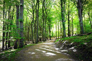 Frühlingswald van Ostsee Bilder