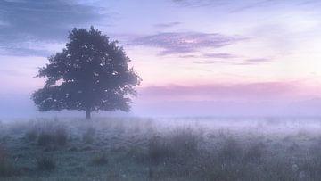 Eenzame boom van Davy Sleijster